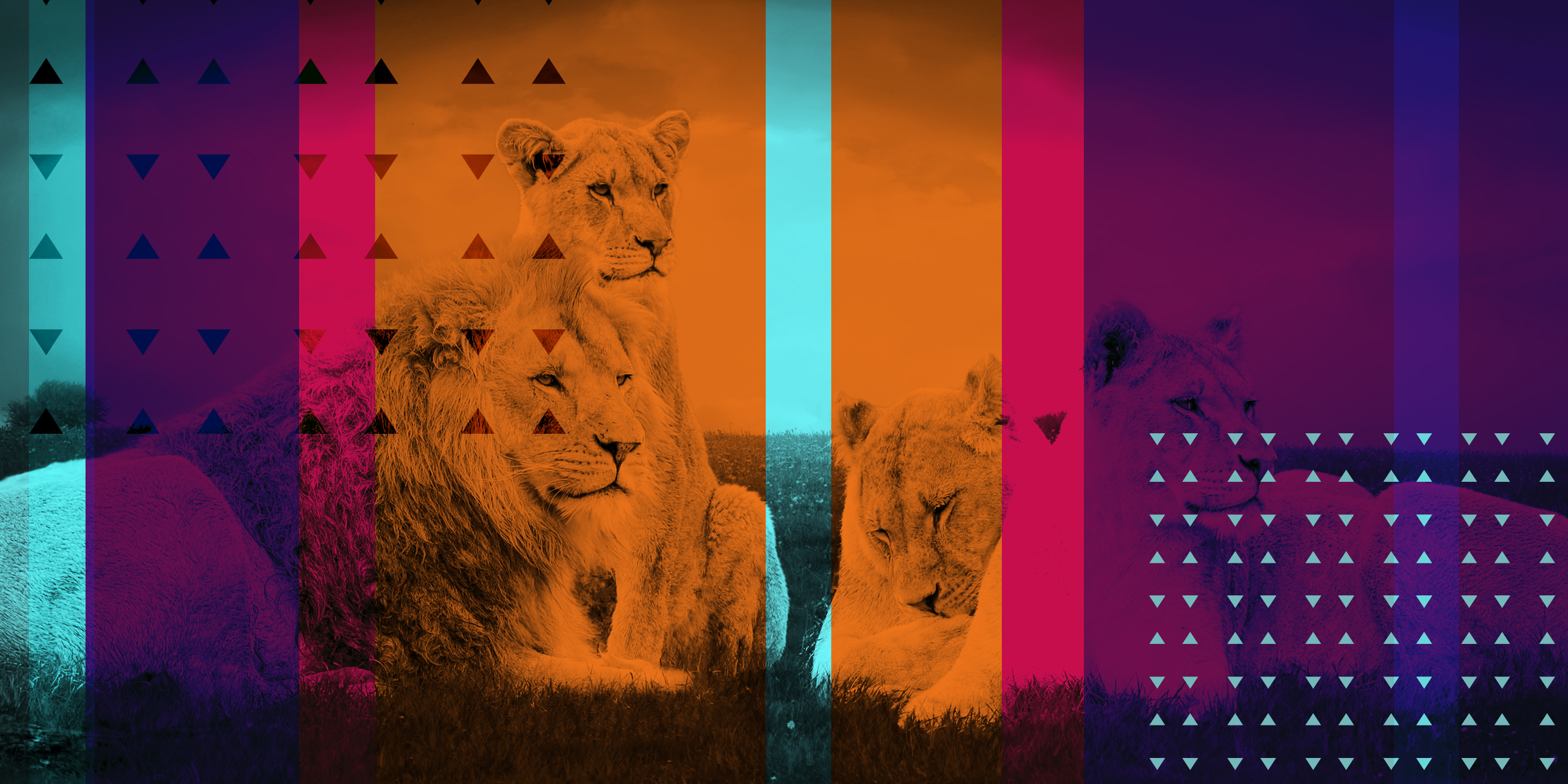 Image of three lions with a multicolored overlay